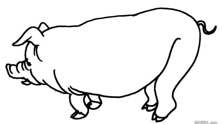 儿童手绘月历猪画