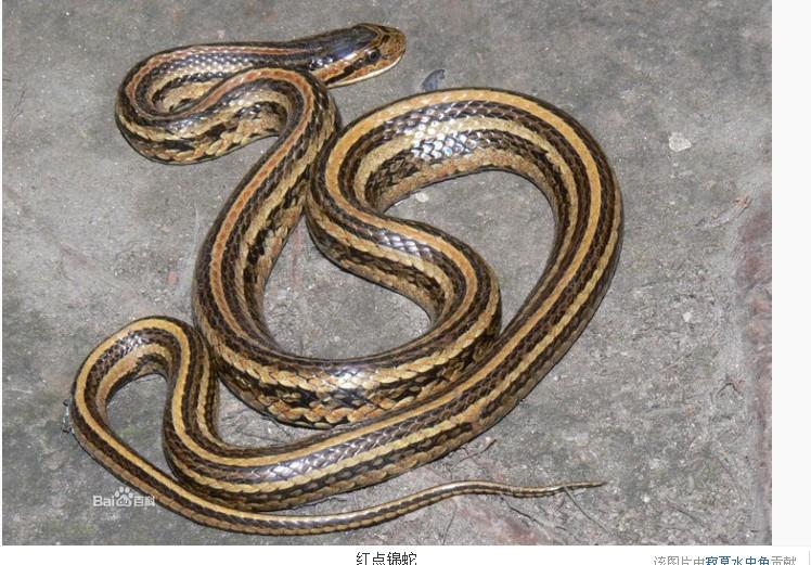 动物 蛇 748_521