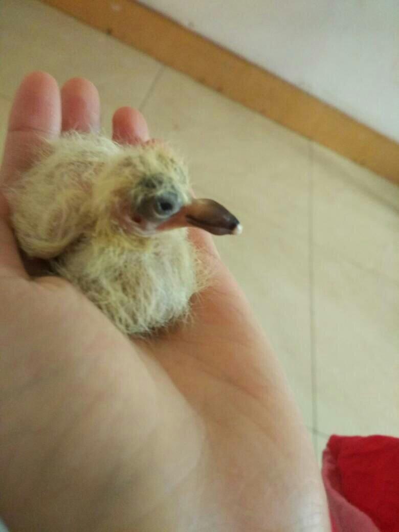 子出五天壳小鸽了,还是大,死么梦见自己被蟒蛇咬了手图片