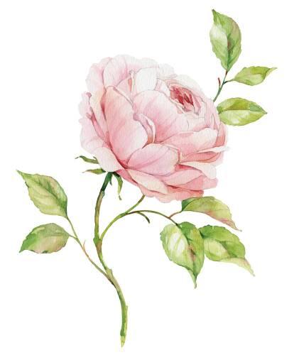 好看的花边手绘图片