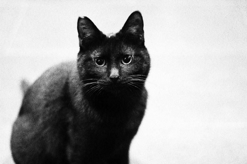 梦见猫和一只黑色瘦狗
