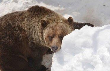 冬眠的动物有哪些图片介绍