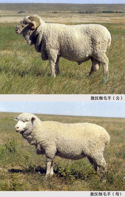 鱼羊设计图
