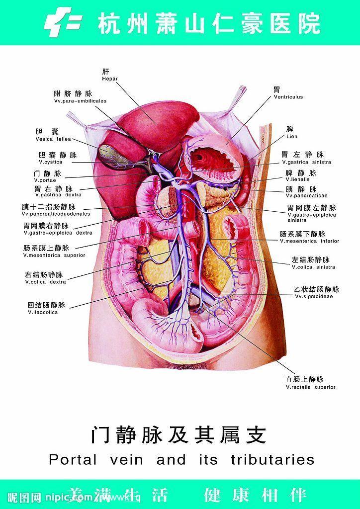 人體動脈分布圖手繪圖