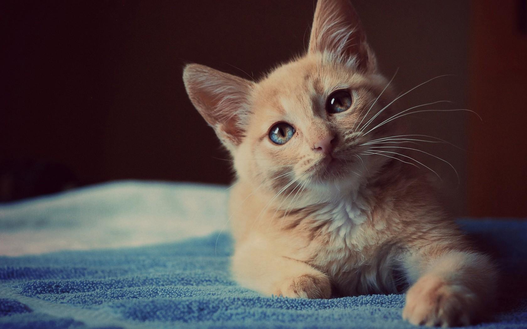 我完全不知道动物的猫怎么画.orz 就随便画画.真的.瞎眼.
