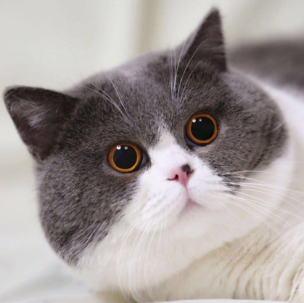 什么品种猫猫?