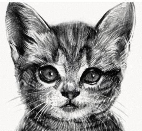 壁纸 动物 猫 猫咪 素描 小猫 桌面 454_417