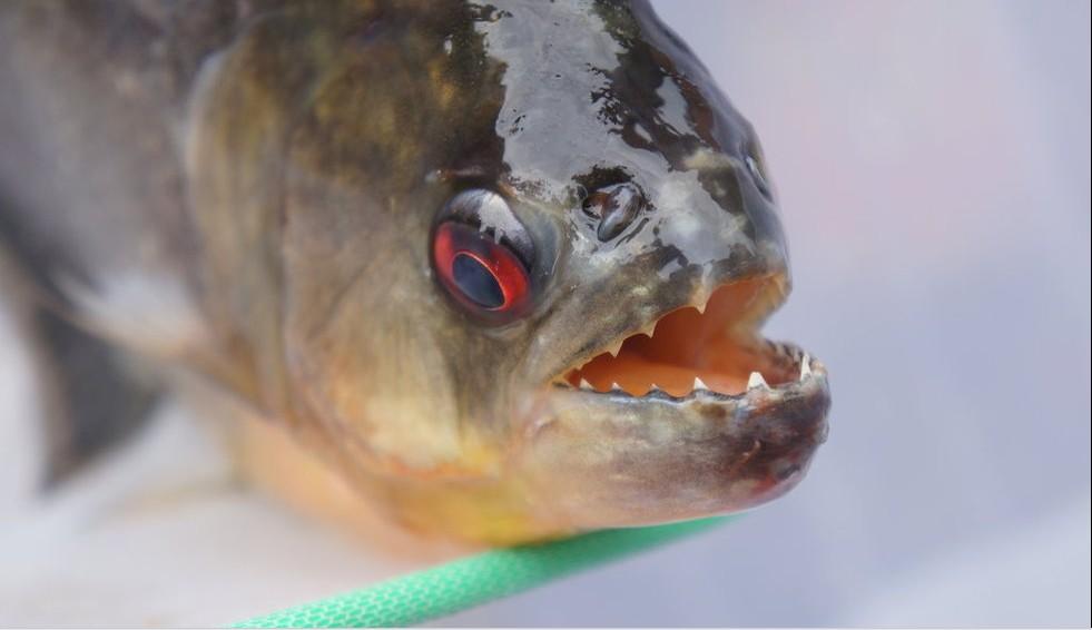 梦见拿鱼是什么意思呢