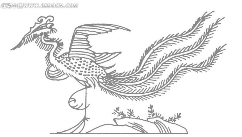 孔雀和凤凰怎么画