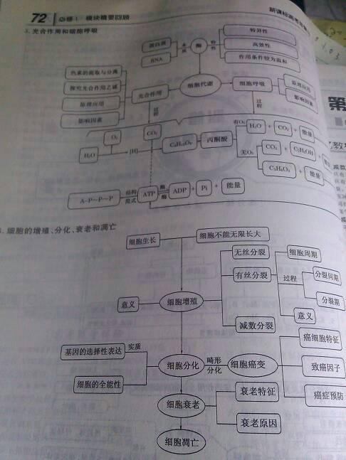 知识高中v知识一二三的生物高中总结框架图结构阳泉图片