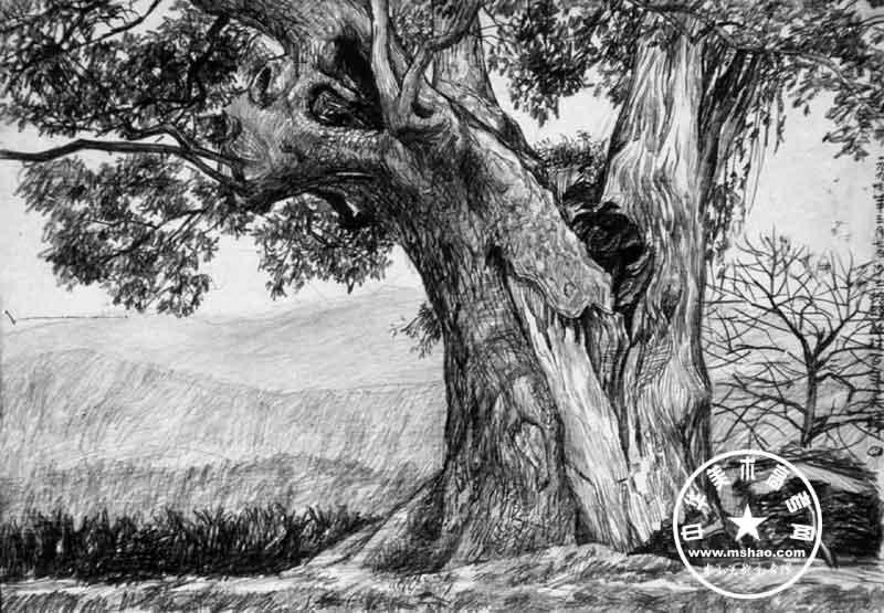 画大树的步骤素描