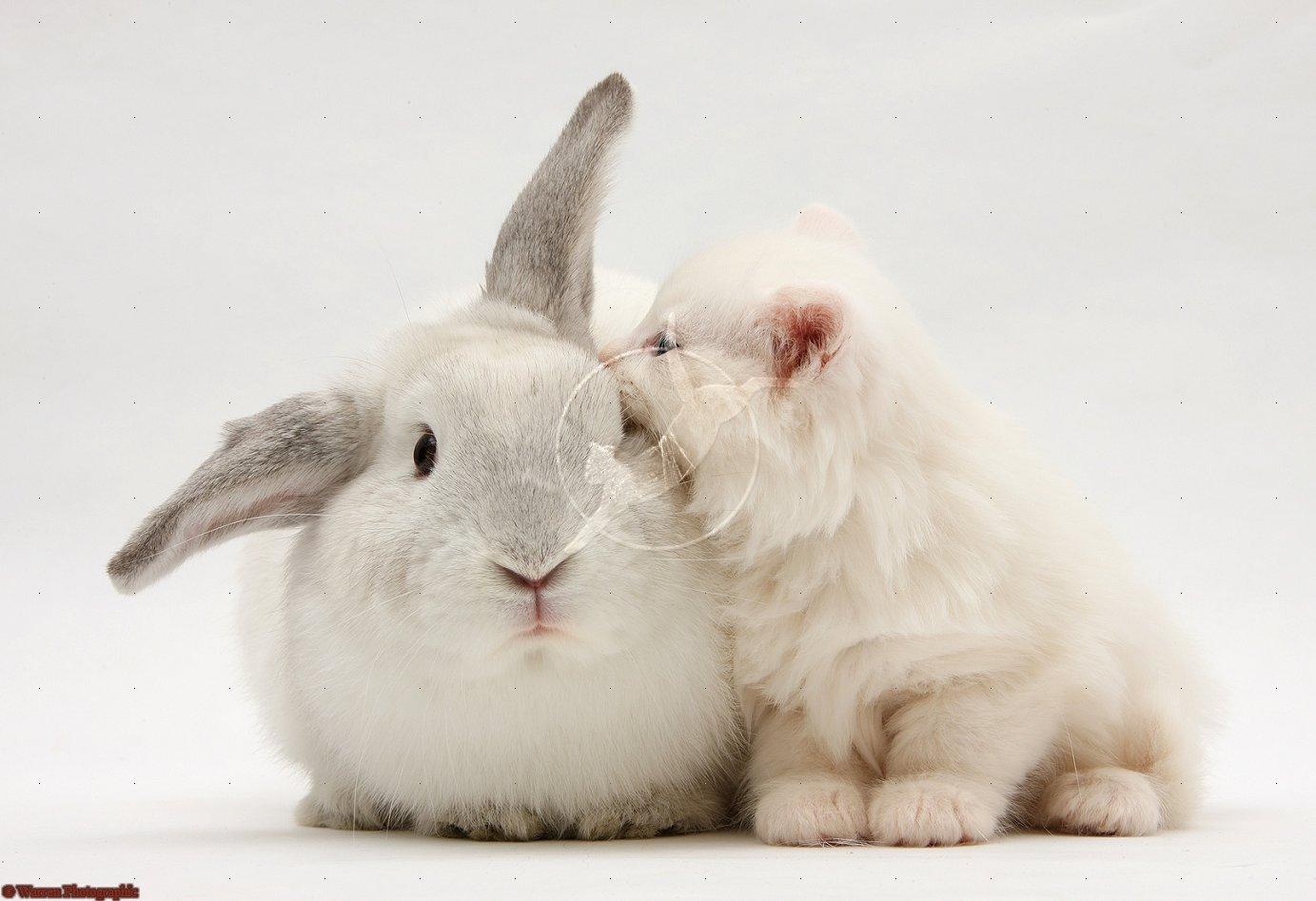 跪求一张猫和兔子说悄悄话的图片