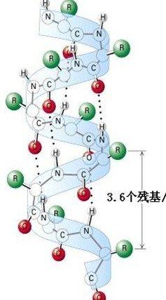 蛋白质结构的蛋白质折叠