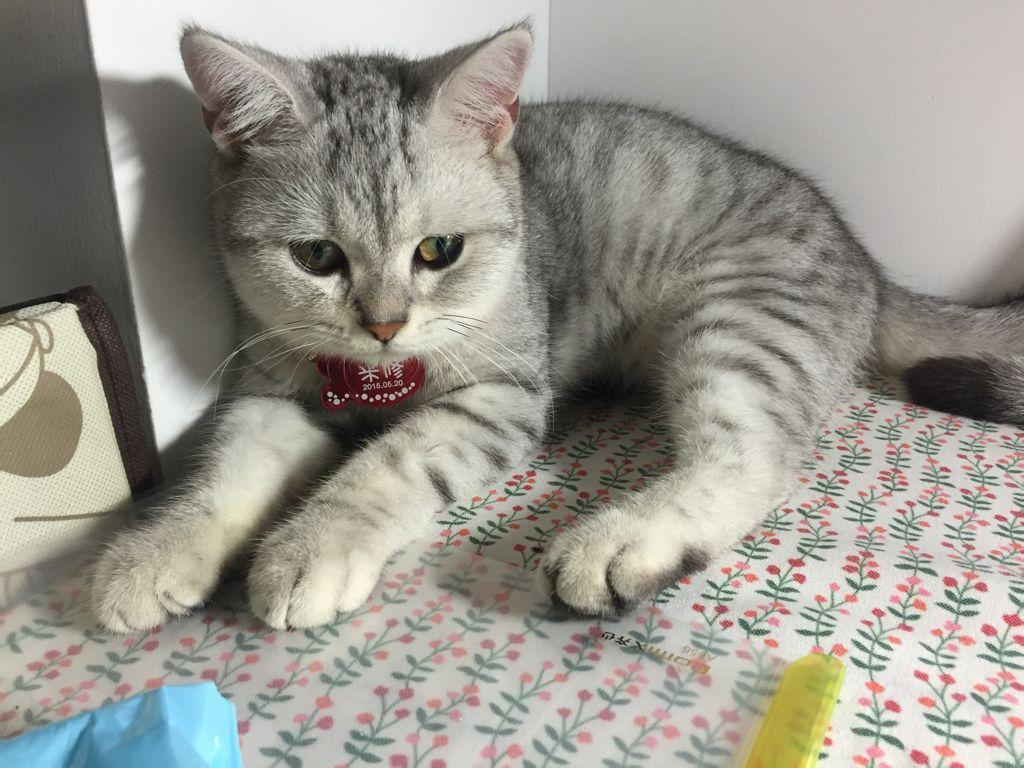 可爱猫猫微信图