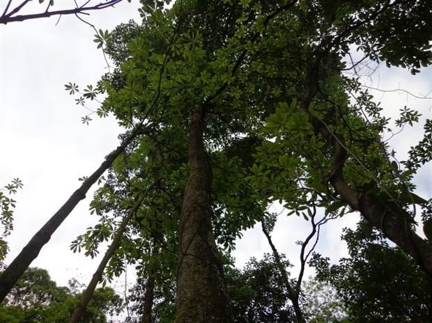 谁有楠木树图片