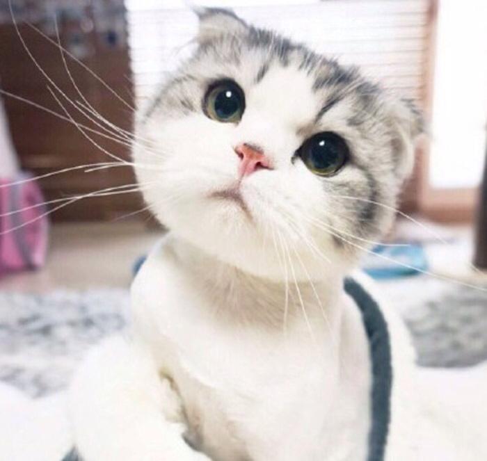 手绘萌猫电脑壁纸