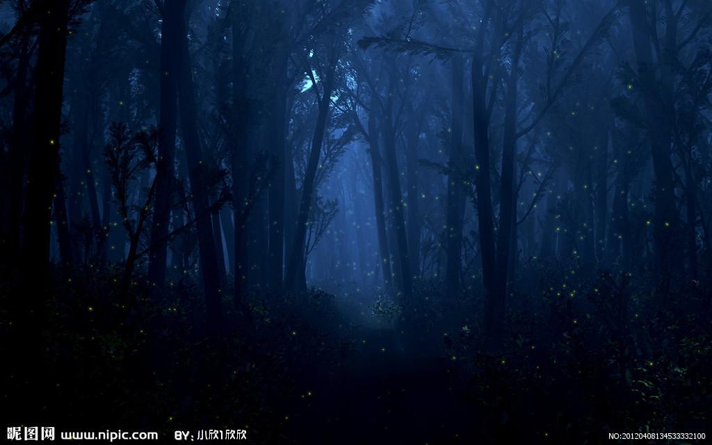我需要动漫风森林的图片,最好有早上和晚上的