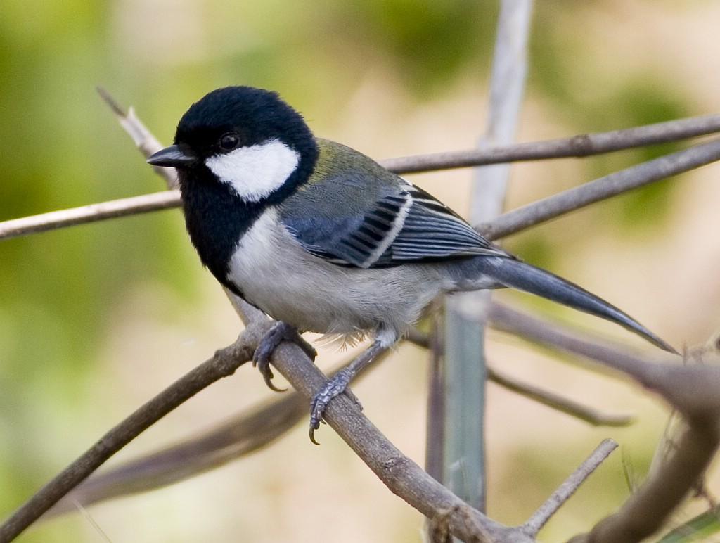 这是鸟?黑头部,跟白色差不多大,麻雀也有白色.辽宁省松材方案病防控v这是线虫图片