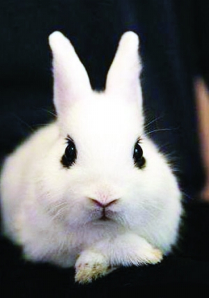 问:谁出自我田鼠只动画叫兔子!告诉哪部这是!谢谢!名字一窝能生几个图片