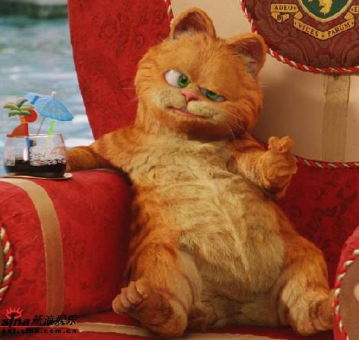 动画片加菲猫的照片