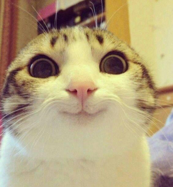 求这张逗比猫的图片做头像