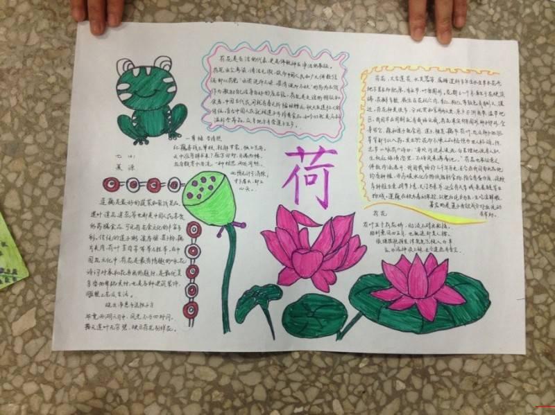 植物手抄报的照片