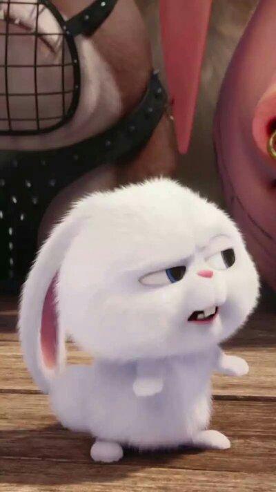 谁有这只兔子的其他图片?越多越好