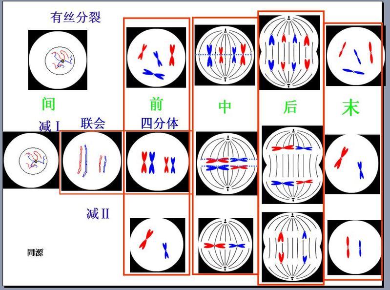 有丝分裂和减数分裂的图像判断如何判断是有丝分裂或者减数分裂 并