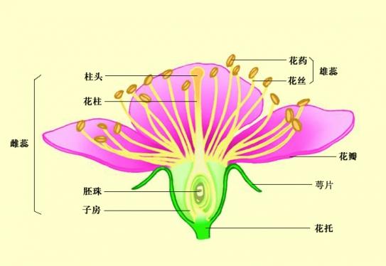 如图是桃花的结构图(1)标出各部分结构名称:①