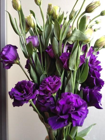 请问这种紫色的花叫什么名字?