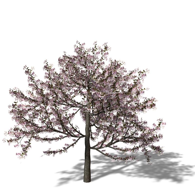 求一张樱花树手绘图 最好是一整棵树 像下面的那种树一样 不要发树干