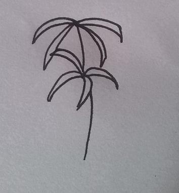 怎么画彼岸花简笔画?