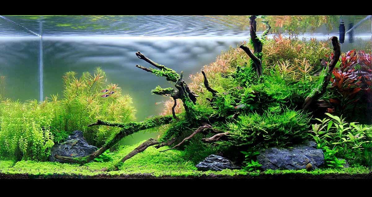 e45ada2f000229a4_重庆水草造景好看的水族馆是哪家,和ada那种造景一样