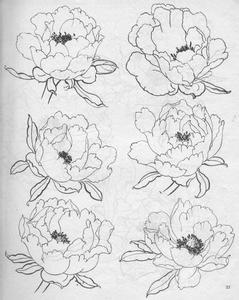 求牡丹花的素描图,多发几张!