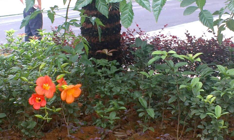 这种藤科植物不知道叫什么名字?我朋友在南岭拍摄的.