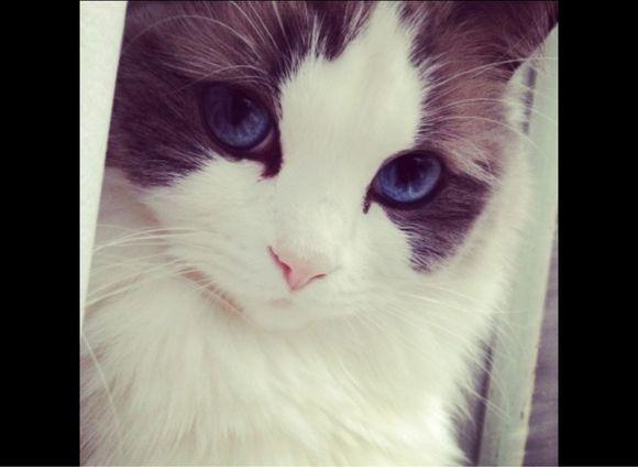 最可爱的动物