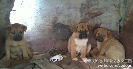 中国小动物保护协会的拦车救狗事件