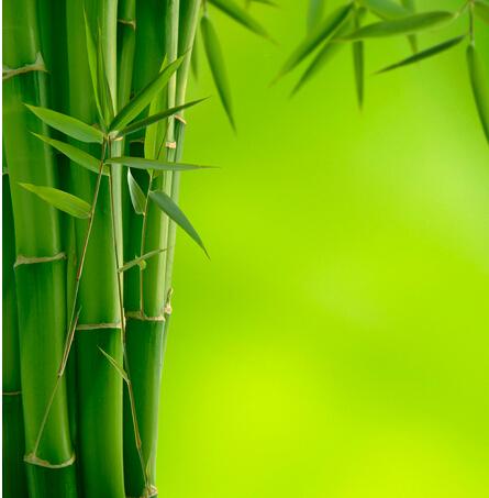 关于竹子的图片和祝福语
