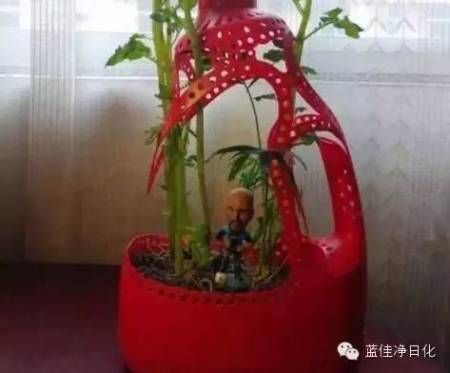 怎么用洗衣液瓶子做花盆制做过程图片