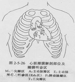 心脏听诊区的听诊区