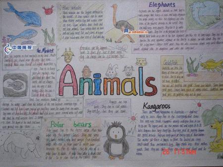 英语手抄报 可爱的动物