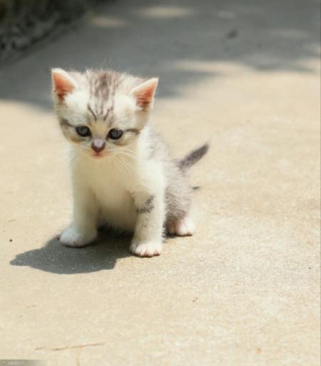 求猫咪照片,最萌的采纳