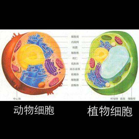 植物细胞和动物细胞各有哪些基本结构