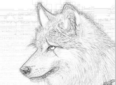 画狼的基本步骤
