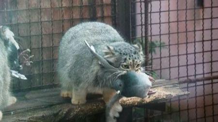 为什么说流浪猫才是最凶残的猫科动物?