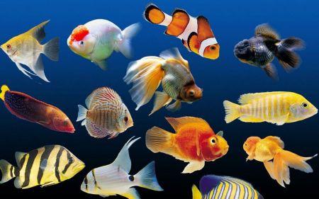 热带鱼刚生的小鱼仔怎么养?图片