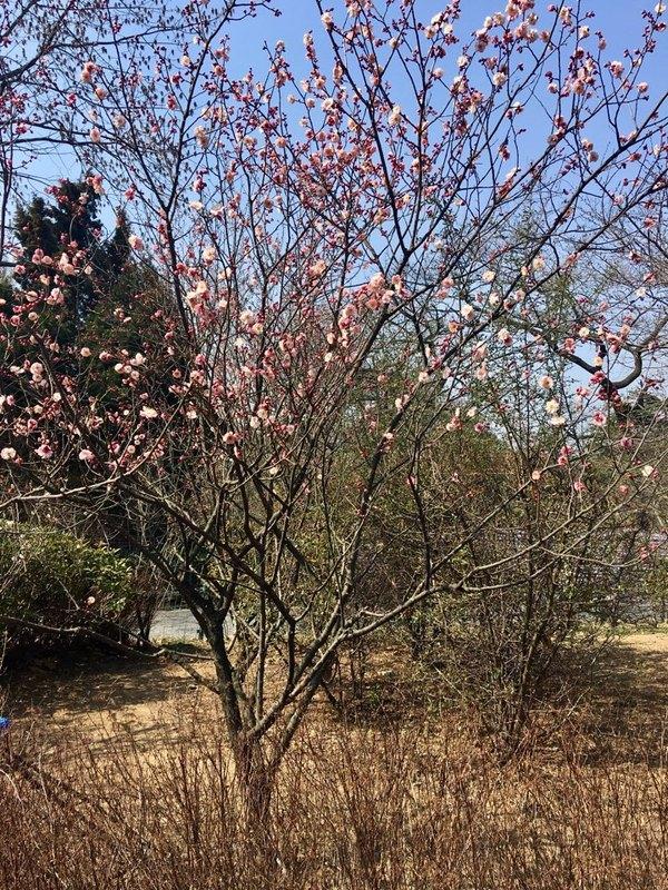 中山公园四季风景随拍