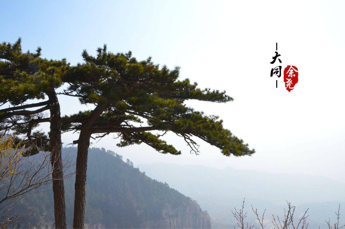 壁纸 风景 树 松 松树 1208_800