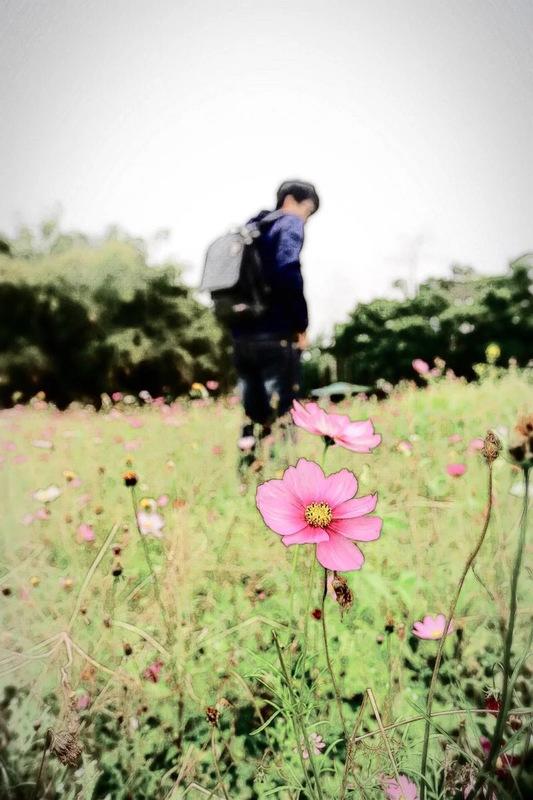 花丛中的背影图片