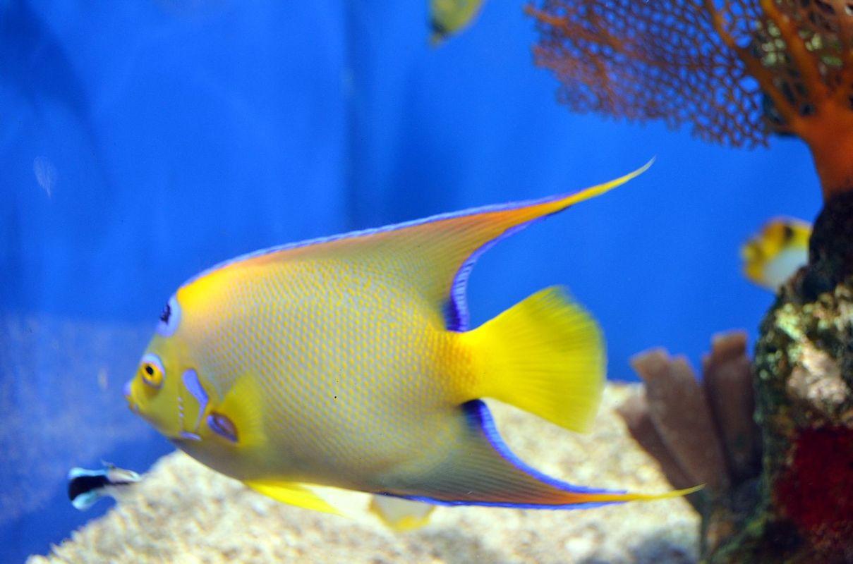壁纸 动物 海底 海底世界 海洋馆 水族馆 鱼 鱼类 1209_800